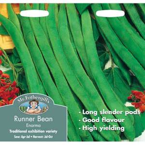 Runner Bean Stringless Enorma (Phaseolus Coccineus) Seeds