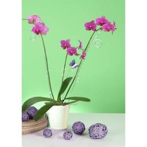 Orchid Pot - White - 14cm