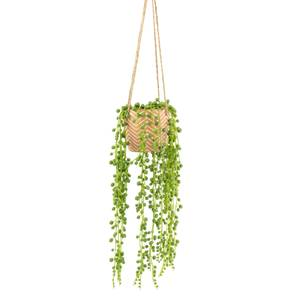String of Pearls Plant in Red Cement Pot