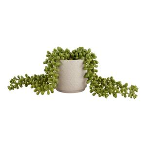 House Beautiful String of Pearls in Ceramic Pot