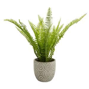 Country Living Maidenhair Fern in Ceramic Pot