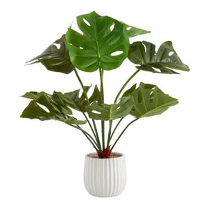 House Beautiful Cheese Plant in Ceramic Pot