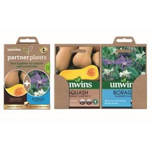 Partner Plants Squash Borage
