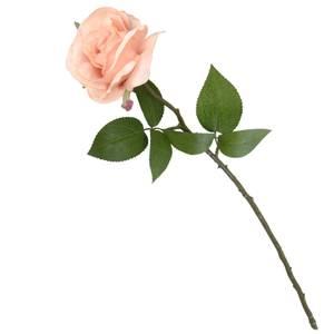 Rose Light Peach