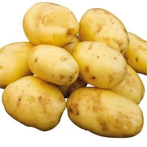 Seed Potatoes Nicola