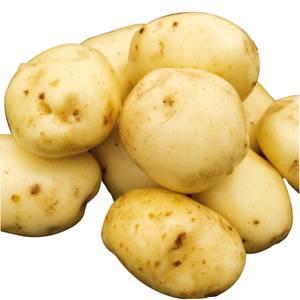 Seed Potatoes Charlotte