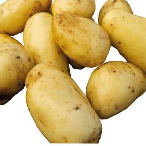 Seed Potatoes Maris Peer