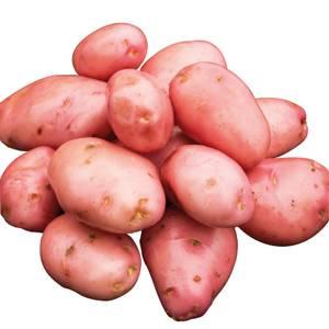 Seed Potatoes Desiree