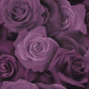 Austin Rose Purple
