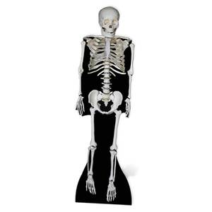 Skeleton Lifesize Cardboard Cut Out