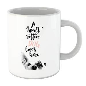 A Spoilt Rotten Dog Lives Here Jack Russell Mug